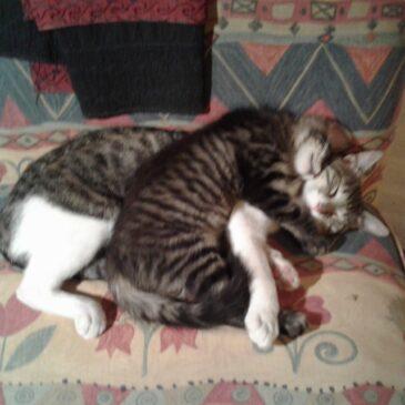 Tres poemas con gatos