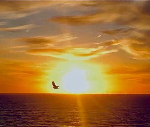 La poesía y el mar 31°