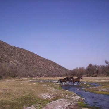 Valle Fertil